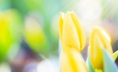 光の中で咲く黄色い花