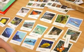 モンテッソーリ教育の生物学で様々な魚の描かれたカード