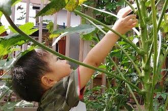 植物の高いところに手を伸ばす男の子